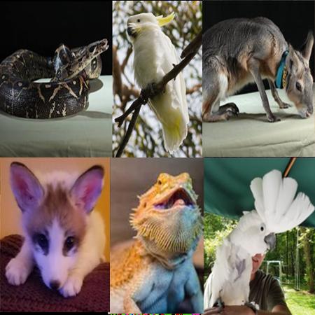 Amazing Exotic Animals